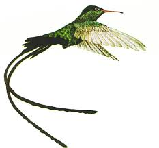 Jamaica National Bird